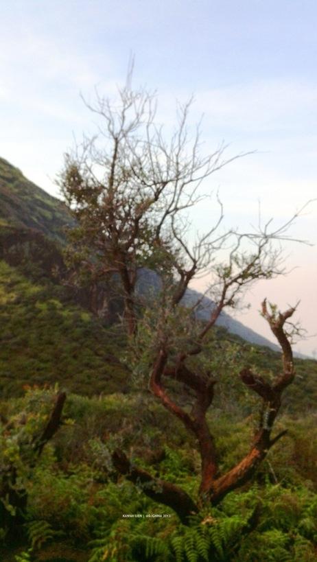Vegetation around Ijen Crater