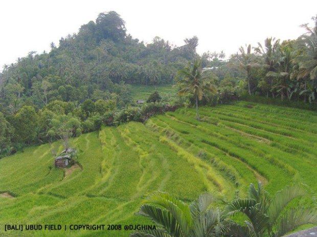 Liburan tenang di Ubud, Bali